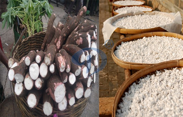 What is the economic benefit of cassava starch production?
