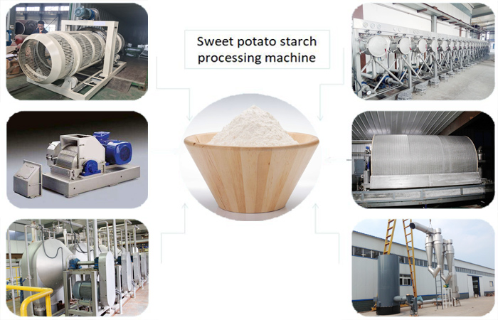 Sweet potato production technology for starch