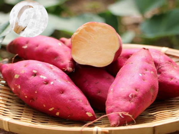 Sweet potato starch processing in the Philippines