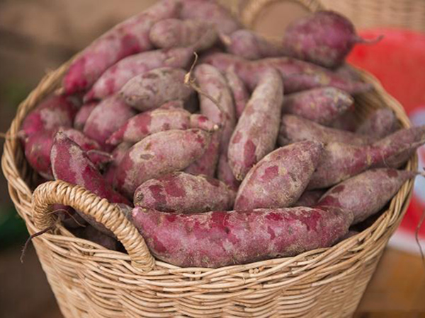 How to store sweet potatoes for winter ?