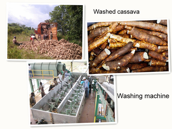 cassava washing machine