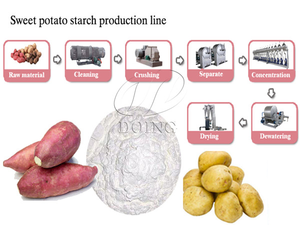 Sweet potato processing plant