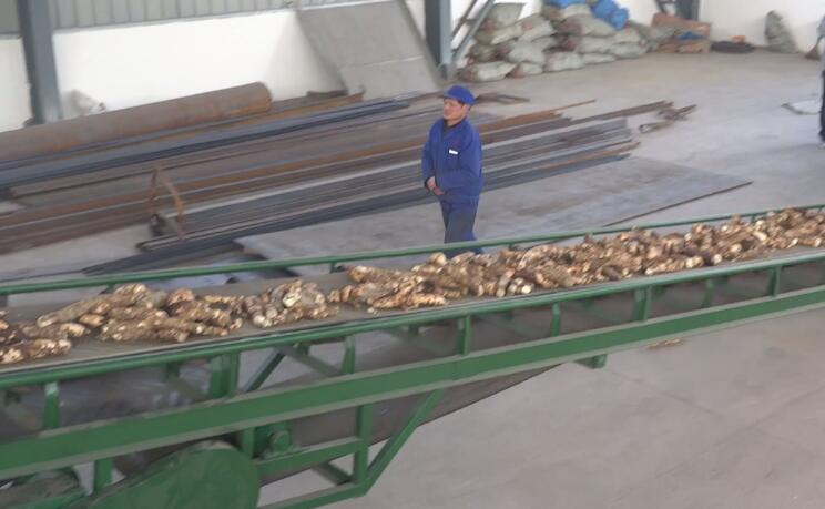 cassava conveying machine
