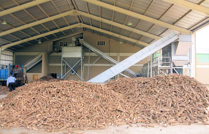 Investing in cassava flour production