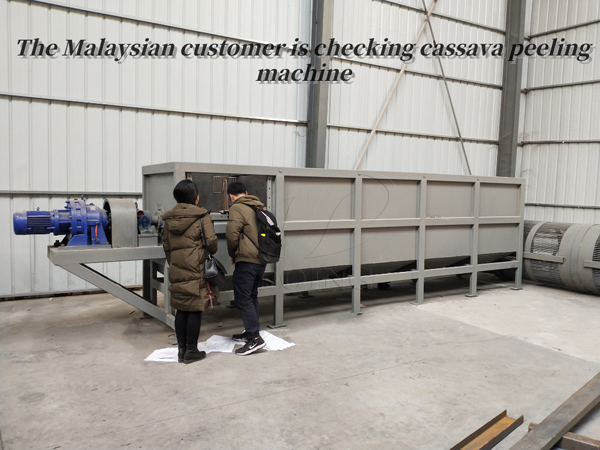 Malaysian customer came to DOING to test cassava peeling machine